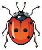 Ladybug Imagen de archivo