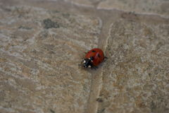 LadyBug [02] Fotos de Stock Royalty Free