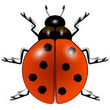 Ladybug against white Royalty Free Stock Photography
