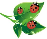 Ladybug_AI illustration stock