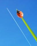 Ladybug and airplane Stock Photos