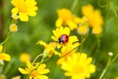 Ladybug and ant Royalty Free Stock Photography