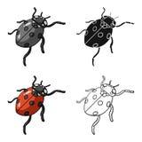 Ladybug is an arthropod.The insect beetle,ladybug single icon in cartoon style vector symbol stock isometric. Illustration Royalty Free Stock Image