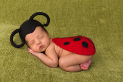 Ladybug baby. Adorable African newborn baby of 7 days old sleeping on a green blanket Stock Images