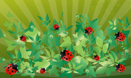 Ladybug background. Royalty Free Stock Photos