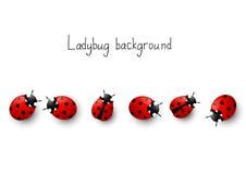 Ladybug background Stock Photography