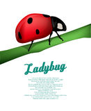 Ladybug background Stock Image