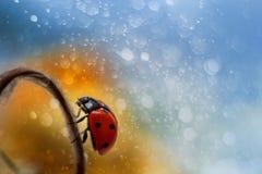 Ladybug on beautiful background as magic Royalty Free Stock Photo