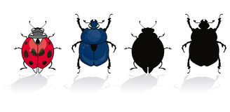 Ladybug and beetle. Isolated on white with his silhouette Stock Photography