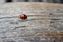 Ladybug on the bench Royalty Free Stock Photos