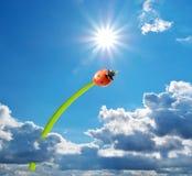 Ladybug and big sun Royalty Free Stock Photography