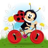 Ladybug on bike. Vector illustration, eps vector illustration