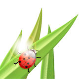 Ladybug an a blade of grass, illustration Royalty Free Stock Photography