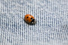 Ladybug on bluejeans. Ladybug macro, exploring the texture of a pair of blue jeans stock photo
