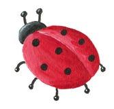 Ladybug bonito da parte traseira Fotos de Stock Royalty Free