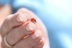 Ladybug Bozhaya сидя на пальцах ` s человека на предпосылке голубого неба стоковое фото rf