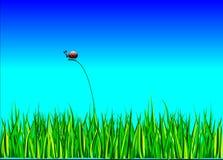 Ladybug, Bug, Grass, Landscape, Sky Royalty Free Stock Photo