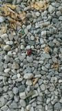 Ladybug. Bug, insects, happiness Stock Photo