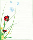 Ladybug with Butterflies Illustration Stock Image