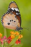 Ladybug and butterfly macro stock image