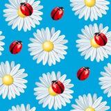 Ladybug and camomile seamless. Colorful ladybug and camomile vector seamless background Stock Photo