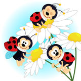 Ladybug on camomile. Vector illustration Royalty Free Stock Photo