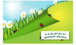 Ladybug, chamomile και ήλιος Θερινή ανασκόπηση Στοκ εικόνα με δικαίωμα ελεύθερης χρήσης