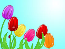 Ladybug che arrampica in su i fiori variopinti del tulipano Fotografia Stock Libera da Diritti