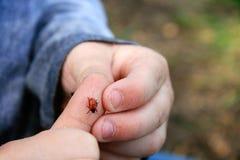 Ladybug on Child Stock Photography
