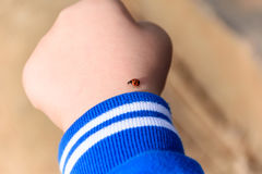 Ladybug on child`s hand. Child fascinated with this little ladybird that landed on his hand Royalty Free Stock Image