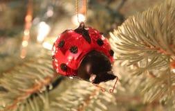 Ladybug Christmas Stock Images