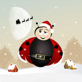 Ladybug at Christmas Royalty Free Stock Photography