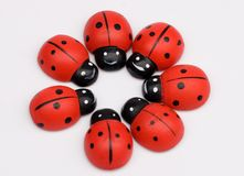 Ladybug circle Royalty Free Stock Photos