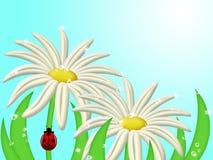 Ladybug Climbing Up Daisy Flower Stem Royalty Free Stock Photo
