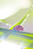Ladybug. Close up of ladybird on green leaves stock images