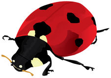 Ladybug Isolated_eps Stock Photo