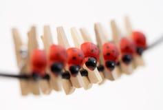 Ladybug clothespins που κρεμά σε ένα σχοινί στοκ φωτογραφίες με δικαίωμα ελεύθερης χρήσης
