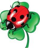Ladybug on clover Stock Image