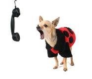 Ladybug coat Stock Photos