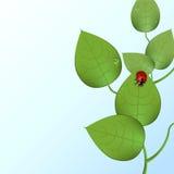 Ladybug cobarde Fotografía de archivo