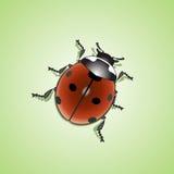 Ladybug (Coccinellidae) Royalty Free Stock Image