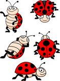 Ladybug collection Stock Photography