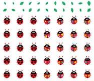 Ladybug colorful weird set. This illustration is design and drawing ladybug colorful weird set in isolated white color background object Royalty Free Stock Photo