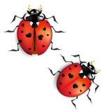 Ladybug con i cuori Immagine Stock