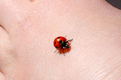 Ladybug Crawling on Back of a Child's Hand Royalty Free Stock Image
