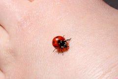 Ladybug Crawling on Back of Hand of Young Child Royalty Free Stock Image