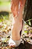 Ladybug crawling on the leg Royalty Free Stock Image