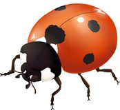 The ladybug crawls on business. Red beetle. Predator. Can fly. Vector illustration Royalty Free Stock Images