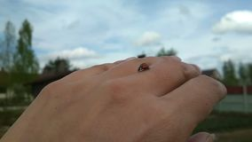 Ladybug creeping by the hand stock video footage