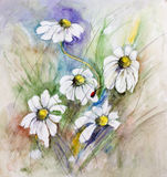 Ladybug on daisies. Small red ladybug on daisies flowers. Watercolor handmade painting illustration Royalty Free Stock Images